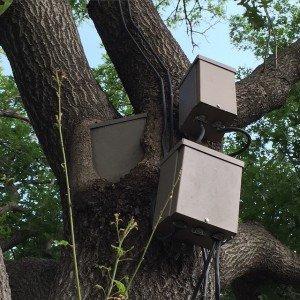 Ballast embeded in a tree