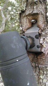 tree mount embeded1