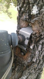 tree mount embeded2